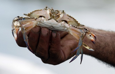 Russia crab export to Japan actually halted after anti-smuggling deal takes effect